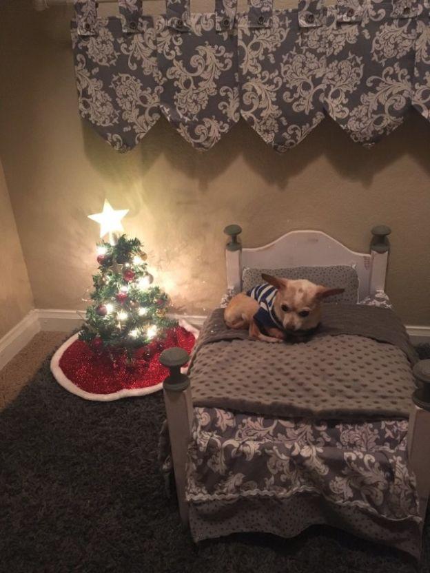 Una mujer sorprende a su perro con un pequeño árbol de navidad sólo para él, Betsy Redfern, Cupid Mississippi christmas tree miniature dog