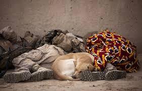 comprobado mostrar compasion por los animales mejora tu salud beneficios empatia voluntariado