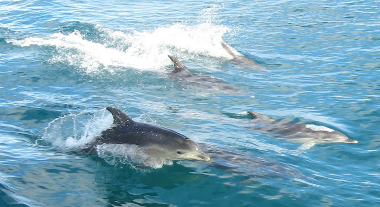 https://www.thepetitionsite.com/es/119/517/250/galveston-bays-dolphins-were-poisoned-%E2%80%93-hold-polluters-accountable/