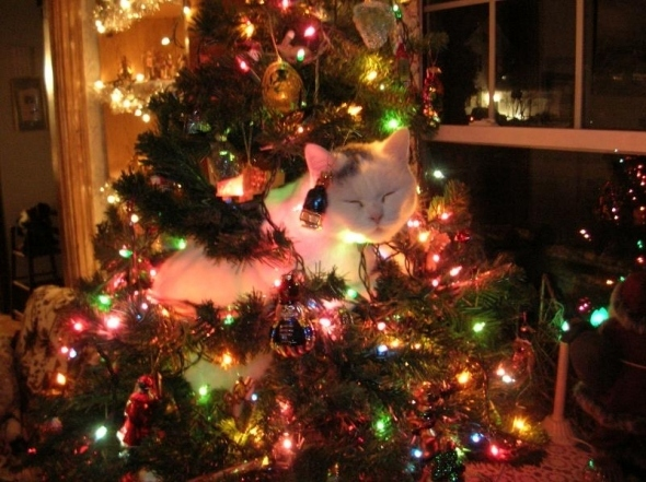 13 gatos en arboles de navidad lista gracioso christmas tree cats catlover escondidos