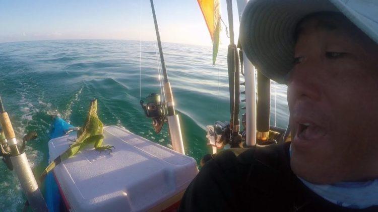 un hombre estaba remando en los cayos de florida y se encuentra con una iguana en el medio del océano a km de distancia de la tierra, sorprendente y muy extraño rescate keys west kayak man steve rescue sea ocean