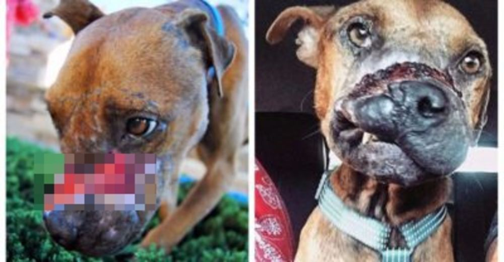 Jude, la cara del abuso animal – Fue terriblemente torturado, pero sigue amando a los humanos