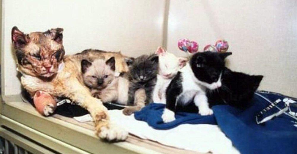 El amor de una madre gata le hace entrar al fuego 5 veces para salvar a sus bebés