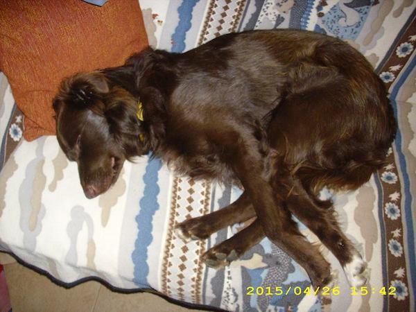 Messina perro rescatado bolsas basura paralisis patas Dominique Mastroianni pelirrojo canela labrador adopcion mascotas