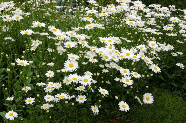 4 plantas que debes cultivar en tu jardin para salvar a las abejas save the bees ecologia jardineria cultivo horticultura