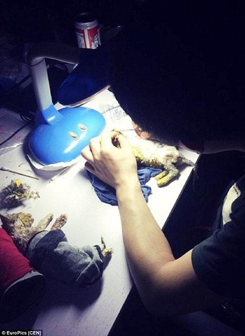 yue-you-meng-encuentra-gatitos-banados-en-pintura-china-04