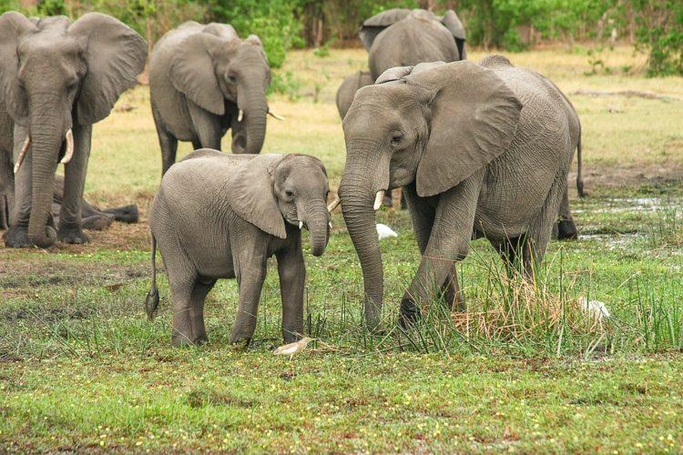 bebe elefante muere por horda personas aterrorizado selfies mama india alejar fuego cohetes cosechas destruccion arroz