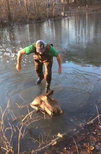 Arriesga su vida para rescatar a un peque o ciervo for Hule para estanque