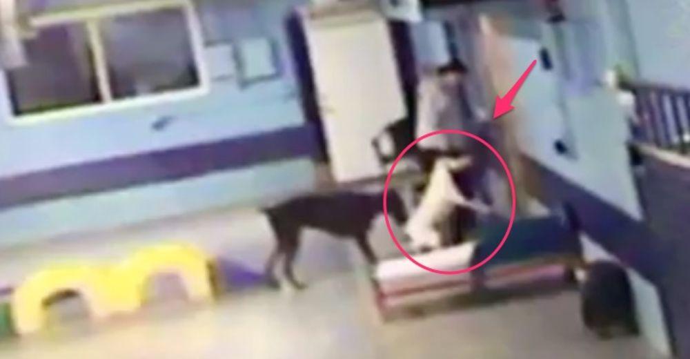 Deja a su perro bajo el cuidado de una guardería canina y por vídeo descubre el trato que recibe