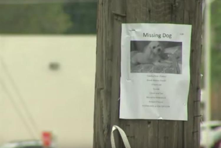 perrito huye de casa para encontrar a sus dueños camina hasta el hospital donde trabajan United Memorial Medical Center New York Katelyn DiSalvo Cindy Buddy