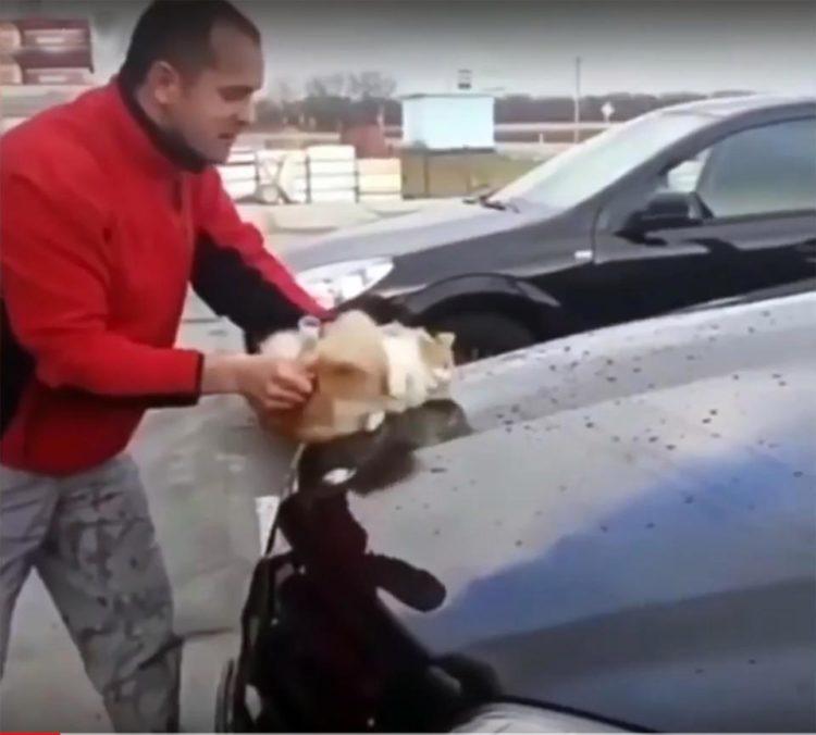 gato callejero esponja lava carro auto mercedes benz rusia desalmado crueldad animal cat wash car abuse cruelty