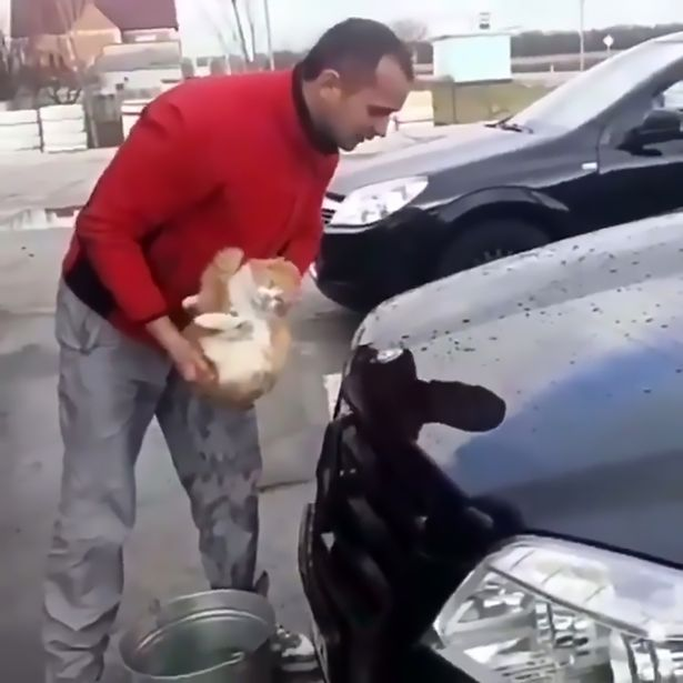 gato callejero esponja lava carro auto mercedes benz rusia desalmado crueldad animal cat wash car abuse cruelty