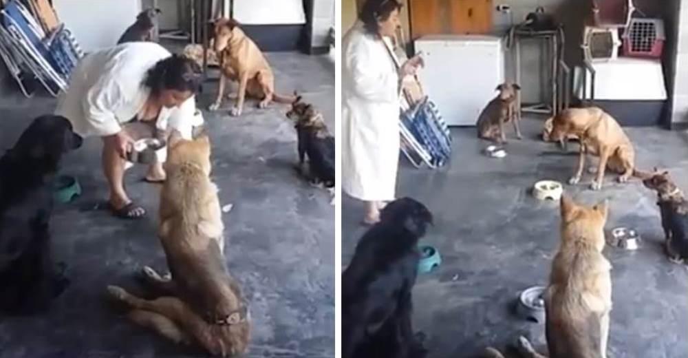 Estos perritos rescatados tienen la costumbre más tierna antes de comer