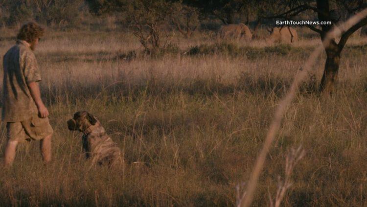 rinos tienen una protección muy especial, perros unidad canina de rescate rinocerontes sudafrica africa caceria furtiva cazadores ilegal southafrica rhino crisis poaching poachers canine unit rhino fortress Carl Thornton