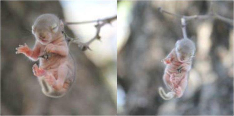 Elize and Anton Olivier creian que verian una ave extraña pero encuentran y salvan a una ardilla recien nacida que colgaba ahorcada por una rama rescate espinas thorn