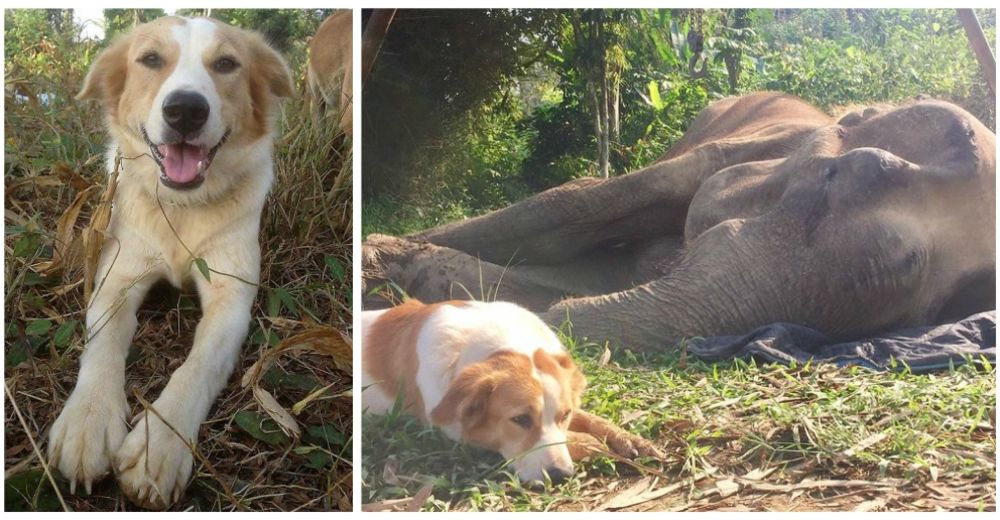 Una solidaria perrita se resiste a separarse de su amiga elefanta en sus últimas horas de vida