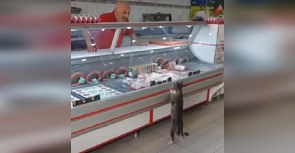 Graban a un perseverante gatito en el mostrador de una carnicería y el carnicero reacciona