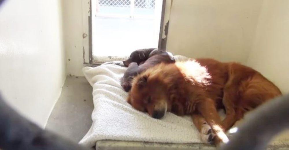 Sufrieron tanto que ni siquiera querían comer hasta que los pusieron en la misma jaula