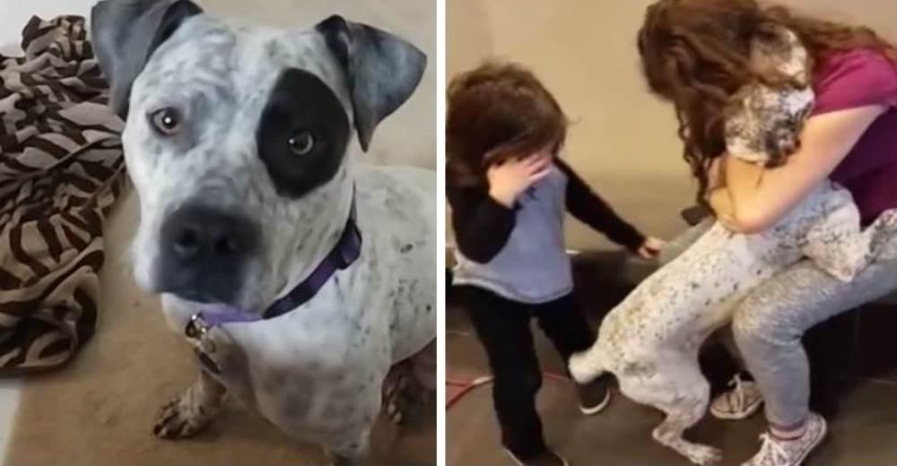"""La amenazaron con quitarle su hogar si no se deshacía de su """"peligrosa"""" perrita pitbull"""