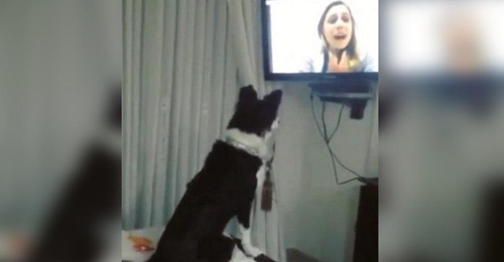 Una perrita enloquece de amor al recibir una videollamada de su dueña tras 9 meses separadas