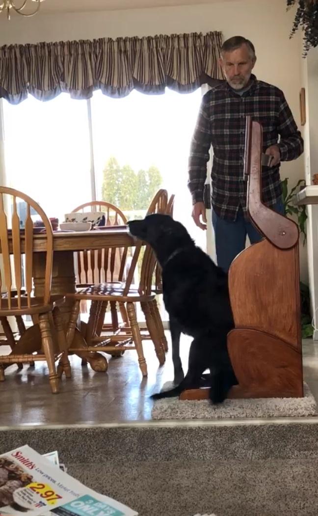 perrita daisy no puede comer bien pues tiene una discapacidad enfermedad megaesofago asi que su familia le hace una silla para comer especial y la perrita la aprendio a usar en un santiamen