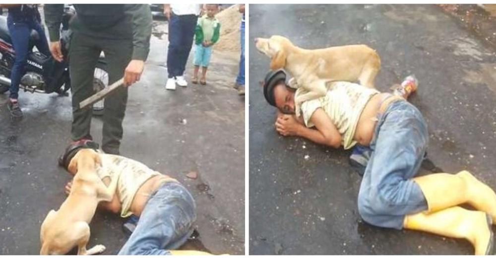 Un perro lucha por proteger a su dueño tendido en el suelo de todos los que querían hacerle daño