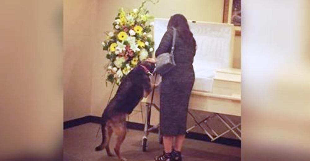 Suplica que le permitan despedirse por última vez de su dueño tras 10 días de llorar su muerte