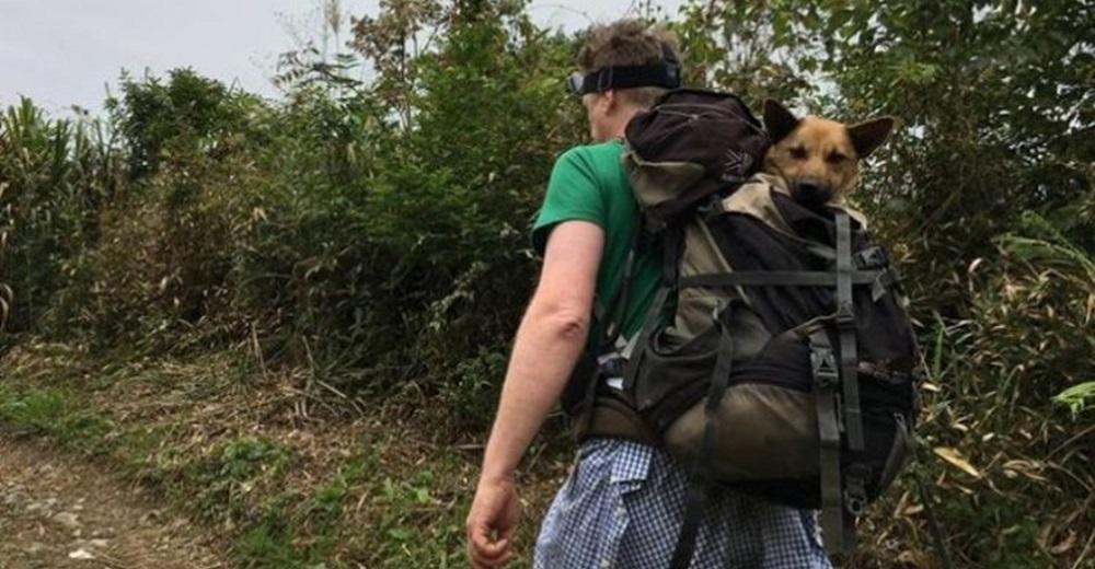 Decide emprender una «caminata brutal» de más de 12 horas cargando a un perrito herido