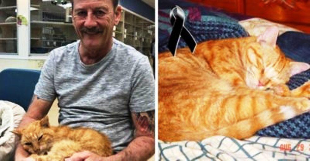 Halla a su gato tras pasar 14 años desaparecido, pero solo para despedirse de nuevo