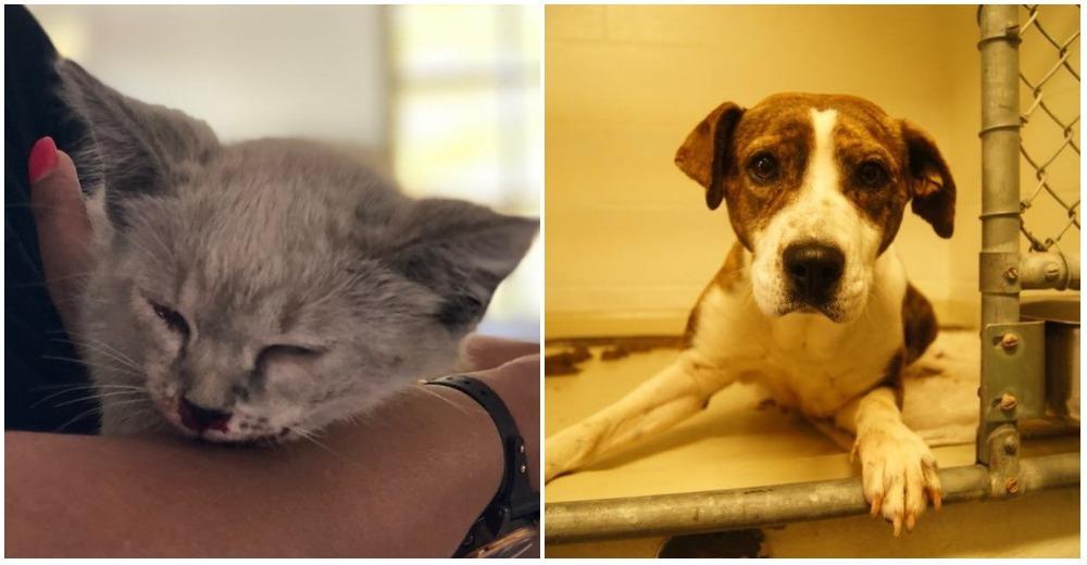 Abandonan 200 gatitos y perritos en un refugio solo en un fin de semana