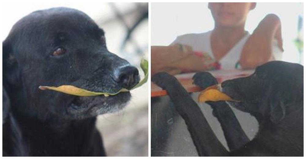 Negro, el dulce perrito mestizo que paga sus galletitas con hojas