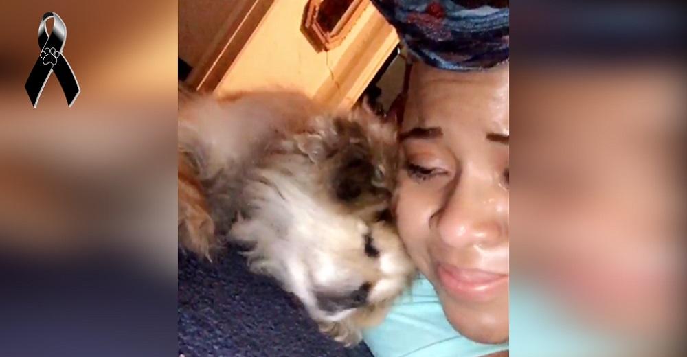 Un perrito consuela a su dueña limpiando sus lágrimas de dolor justo antes de partir