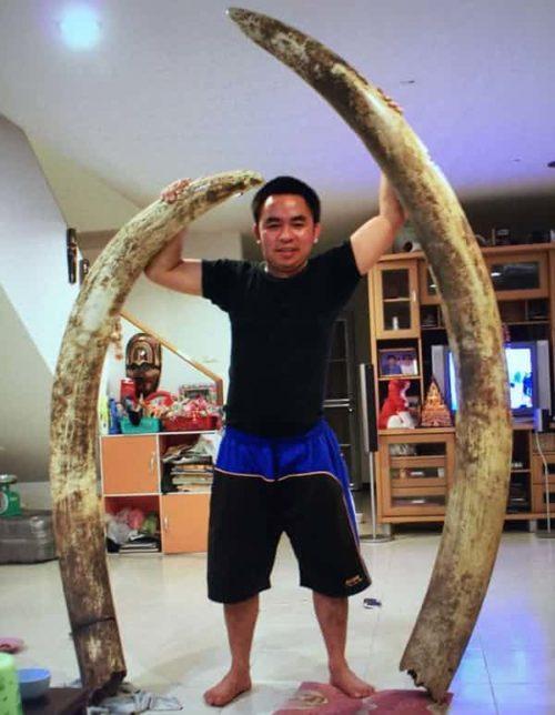 este hombre es responsable de la muerte de cientos de elefantes y rinos hasta llevarlos a su extincion y solo le dan 2 años de prision tusk ivory traffic elephant rhino