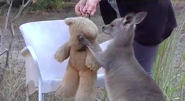 Canguro oso peluche