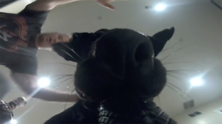 Labrador GoPro