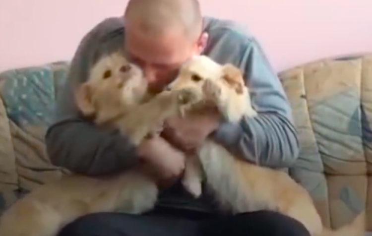 Cachorros Serbia