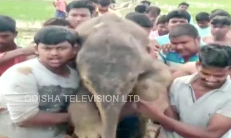 Elefantito Rescate