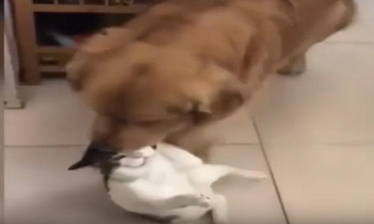 Perro Gato Foto
