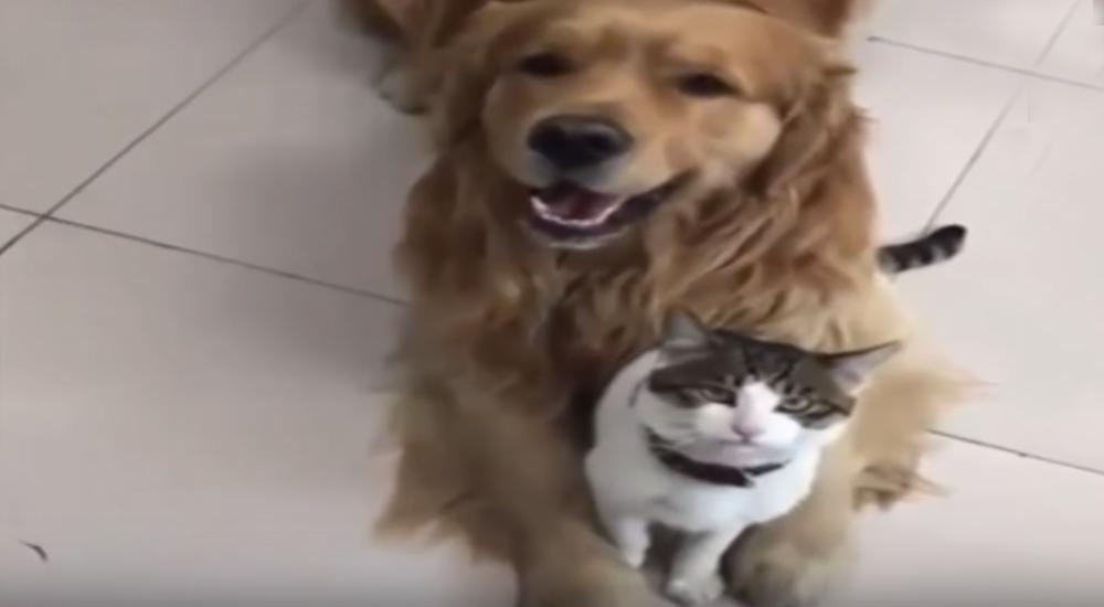 Un gatito se resistía a posar para la foto, pero su amigo perruno lo consiguió a la fuerza