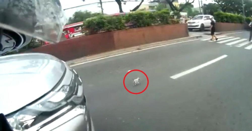 Un motorista detiene el tráfico en una peligrosa autopista para salvar la vida de un animalito