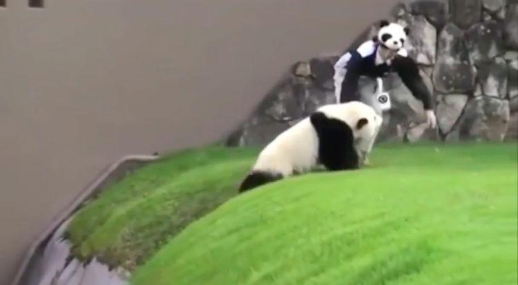 Panda Japón
