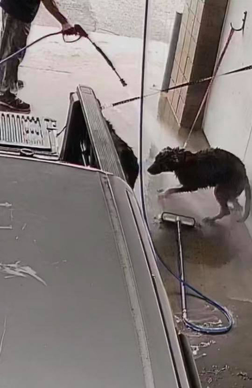 Perros Autolavado
