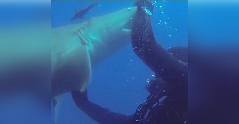 Un tiburón se acerca desesperadamente a un buzo para suplicarle ayuda urgente