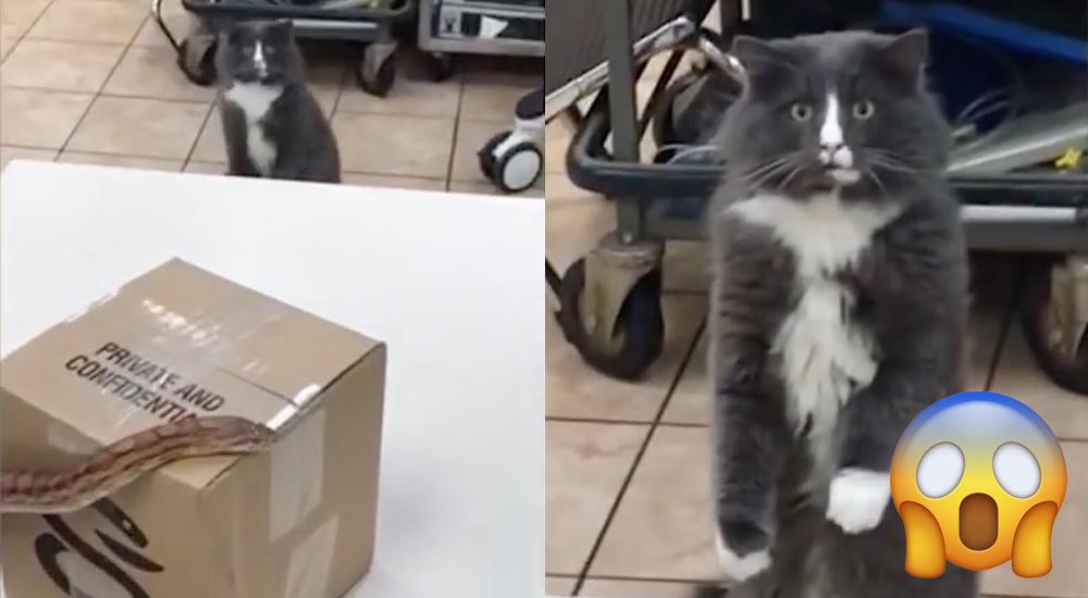 TJ The Cat