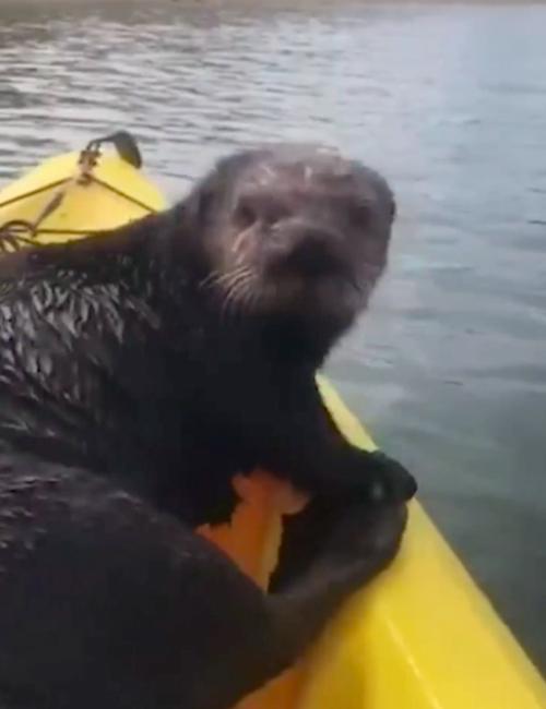 Nutria Kayak