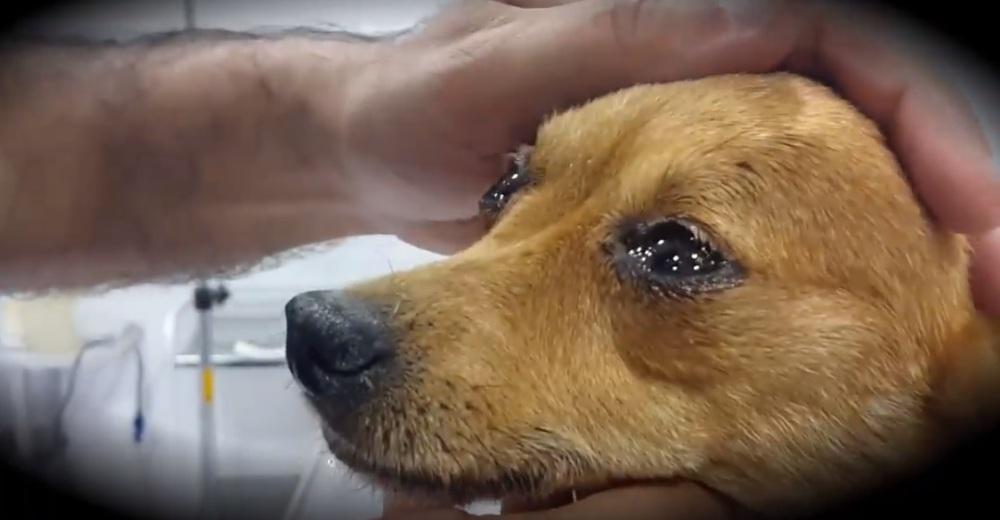 Un veterinario revela qué sienten los perros antes de morir y hace llorar a miles de dueños