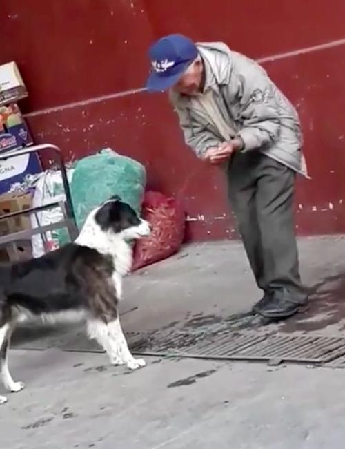 Abuelo y Perro Ecuador
