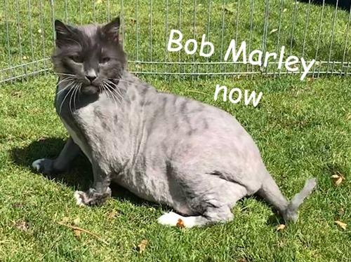 Gato Bob Marley