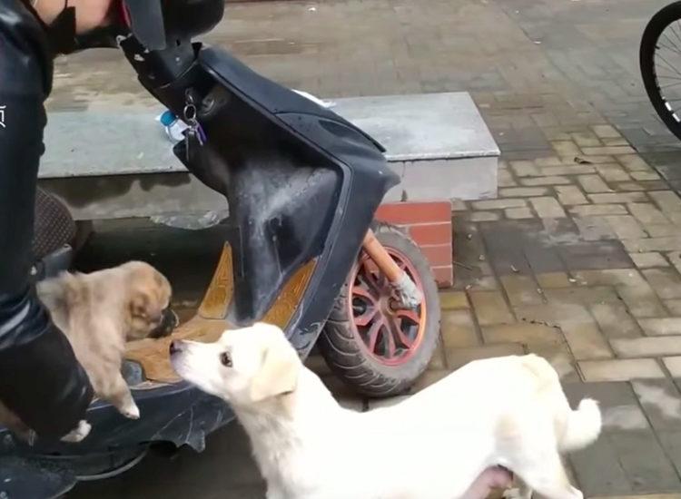 Despedida de perrita en China