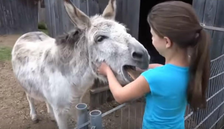 Niña y su burro